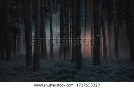 Dark foggy pine scary forest Сток-фото ©