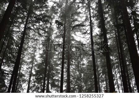 Dark, foggy woods #1258255327