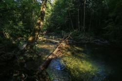 Dark forest and mountain stream