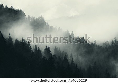 Stock Photo dark forest and mountains, foggy landscape