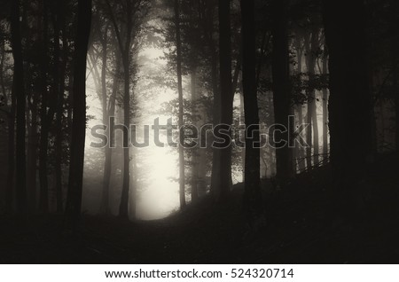 dark forest at night