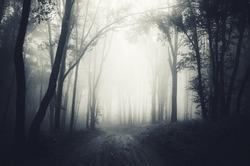 dark forest fog