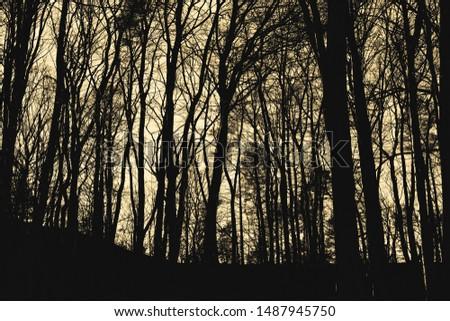 Dark forest in contrasty monochrome. #1487945750