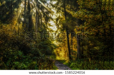 Dark forest path sunlight view. Sun rays in deep forest wilderness. Forest sunbeams scene. Wilderness forest sunbeams view