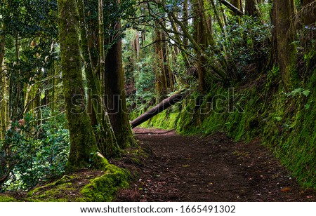 Dark forest road. Deep dark forest road trail. Forest road scene. Dark mossy forest road view