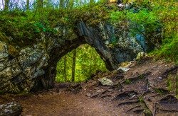 Dark forest trail arch landscape. Arched forest way in woods
