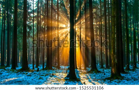 Dark forest trees sunlight scene. Sunset forest trees view. Sunset forest sunlight through trees. Sunset forest trees background