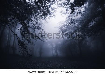 dark forest twilight