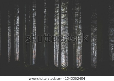 Dark forest with a clearing lighten up by the sun with tree silhouttes in the foreground #1343352404