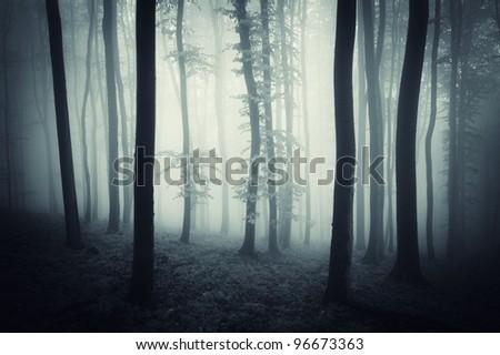 dark forest with fog after rain