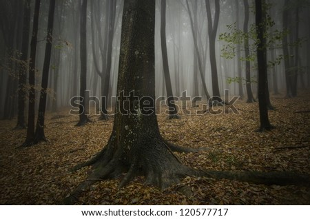 dark forest with fog and big tree