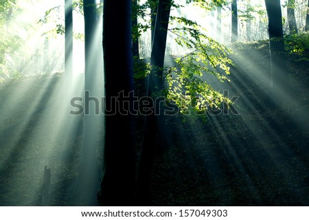 Dark forest with fog and light