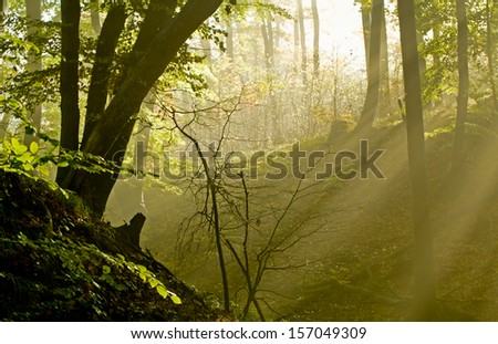 Dark forest with fog and light - stock photo