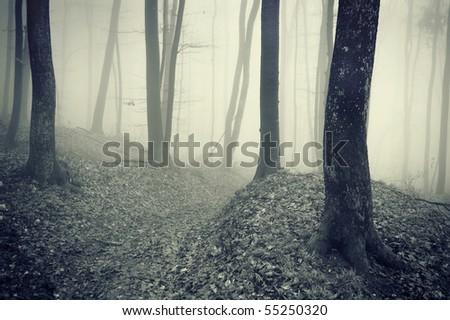 wallpaper dark forest. stock photo : dark forest with