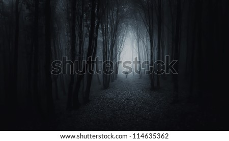 dark forest with man at night