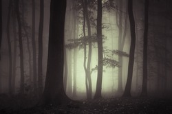 dark forest with mysterious light