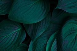 dark green background. green background with leaves