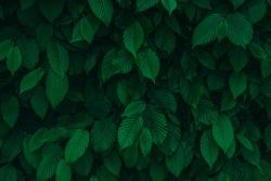 Dark green fresh natural leaves background texture