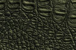 Dark green leather texture background, closeup. Reptile olive skin, macro. Nature structure of textile. Luxury crocodile decorative backdrop.