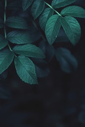 Dark green leaves abstract background, close-up