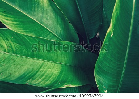 Dark green leaves background,Vintage tone #1059767906