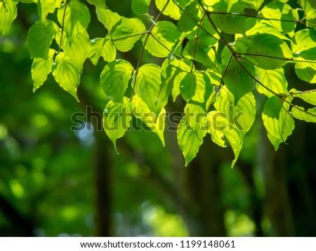 Dark green penetrated through sunlight through sunlight #1199148061