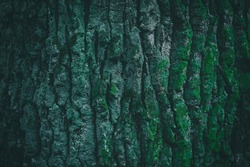 Dark green tree bark texture for background. Beautiful green wallpaper. Moss on the bark of a tree.
