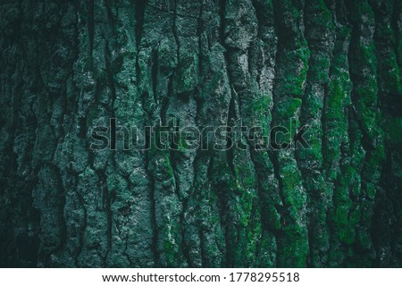 Photo of  Dark green tree bark texture for background. Beautiful green wallpaper. Moss on the bark of a tree.