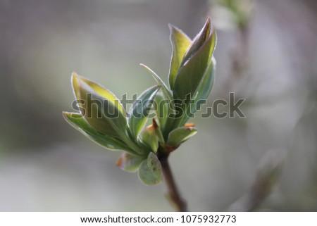Dark green young bush leaves macro closeup