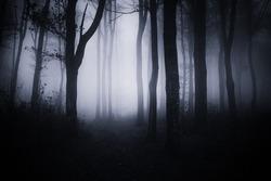 dark halloween forest landscape