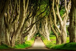 Dark Hedges in Armoy, Northern Ireland at day sunlight. Image with selective focus