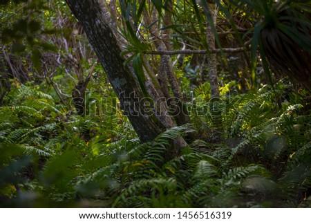 dark jungle of piton mont vert reunion 974 #1456516319
