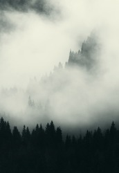 dark landscape with fog trees and mountains