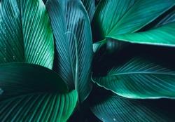 Dark Leaves background Blue green Leaf surface