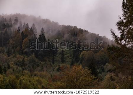 Dark misty Forest, Bieszczady, Poland Zdjęcia stock ©