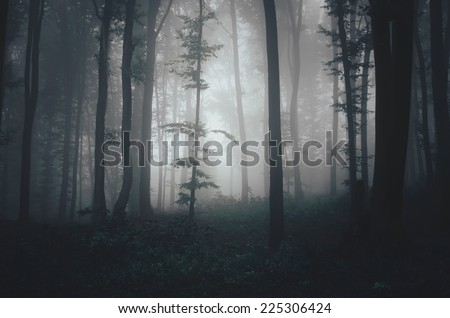 dark misty forest in soft light #225306424
