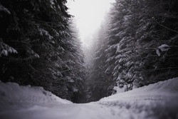 dark moody snow forest covered with snow. snowy wood forest.
