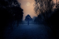 Dark Moody Tree forest scene with full moon