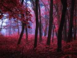 Dark mysterious forest in pink tones. Mystical autumn forest in the morning fog. Beautiful background.