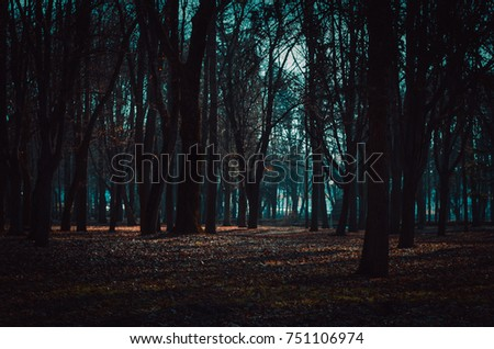 Dark mysterious forest lit by moonlight. Fantastic foggy forest in the mist #751106974