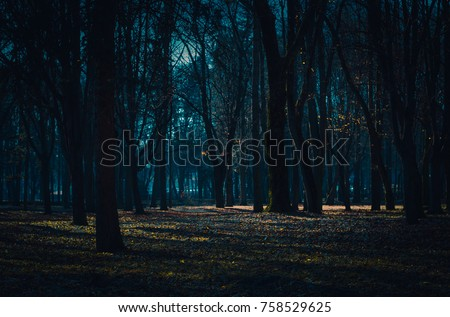 Dark mysterious forest lit by moonlight. Fantastic foggy forest in the mist #758529625