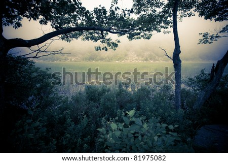 Dark, mysterious image of fog over marshy reeds with silhouetted trees