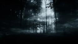 dark mysterious woods background