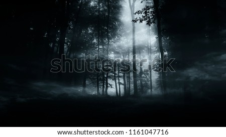 dark mysterious woods background