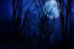 dark night forest against full moon