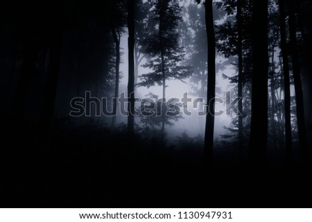 dark night forest background