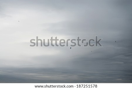 Dark overcast sky and flying birds