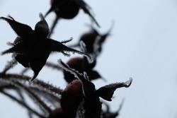 Dark plant covered in ice nature closeup. Winter horror macro background.
