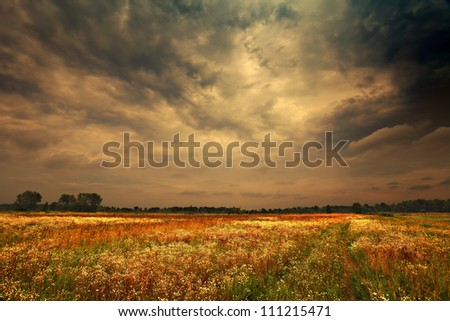 dark rainy clouds over the camomile field
