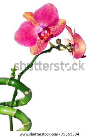 Dark red phalinopsis orchid and bamboo spiral